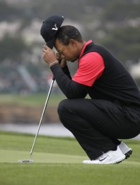 TigerFrustrated Pic